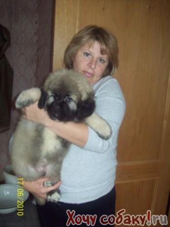 Продам щенка Кавказкой овчарки.
