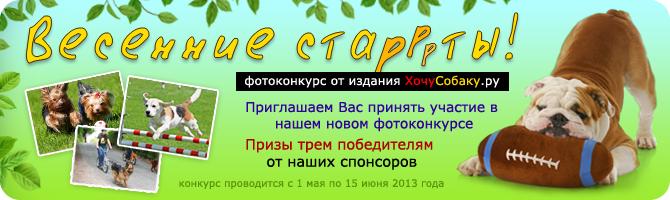 http://www.hochusobaku.ru/img/konkurs_11.jpg