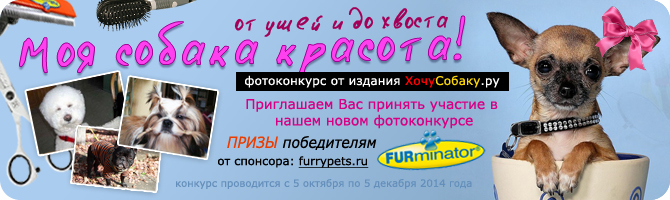 http://www.hochusobaku.ru/img/konkurs_12.jpg