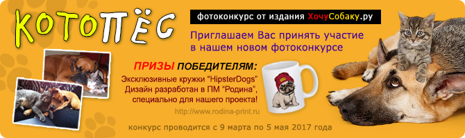 http://www.hochusobaku.ru/img/konkurs_14.jpg