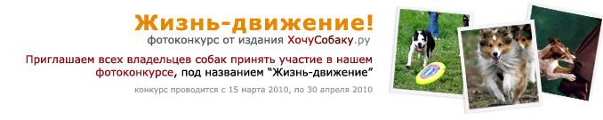 http://www.hochusobaku.ru/img/konkurs_4.jpg
