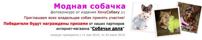 http://www.hochusobaku.ru/img/konkurs_5.jpg