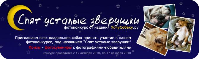 http://www.hochusobaku.ru/img/konkurs_6.jpg