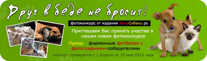 http://www.hochusobaku.ru/img/konkurs_9.jpg