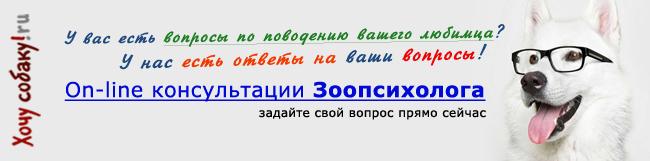 http://www.hochusobaku.ru/img/zoopsicholog.jpg