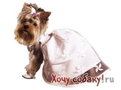 Свадебные платья для собаки