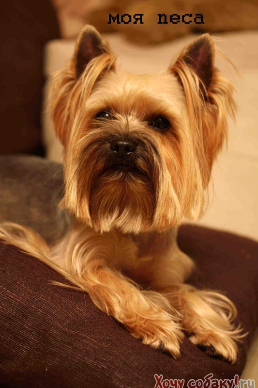 знакомства для вязки собак