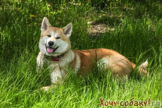знакомства для собак в барнауле вязки